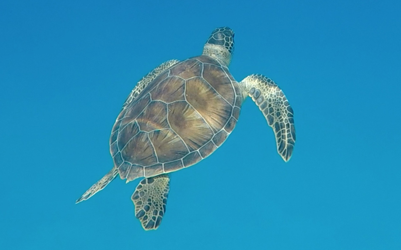 about Loggerhead Turtles